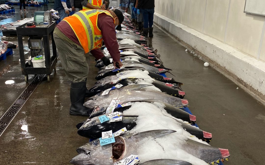 Honolulu Fish Auction, August 17