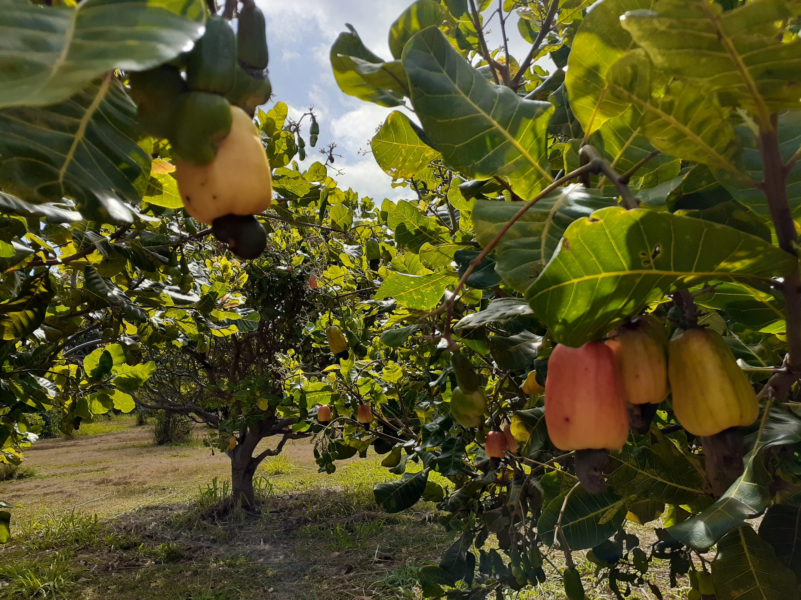 FOOD-A-GO-GO FARMS FEATURE: Neu Mana Hui Farm