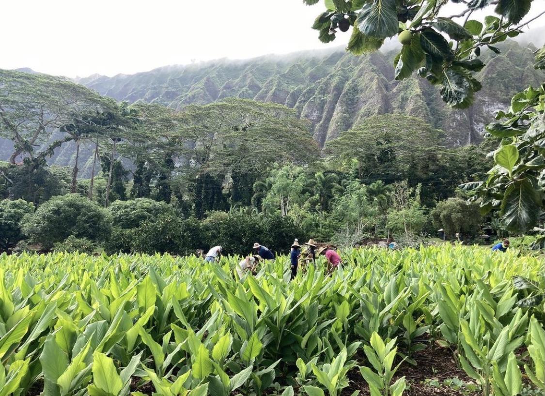 FOOD-A-GO-GO FARMS FEATURED BUSINESS: Yogarden Hawaii