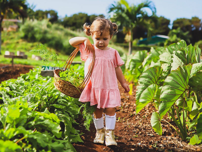 FOOD-A-GO-GO FARMS FEATURED BUSINESS: Keiki & Plow