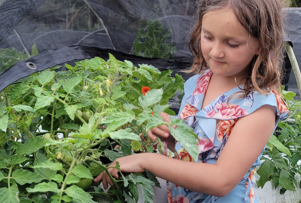 Featured Producer: Waiahole Garden & Nursery