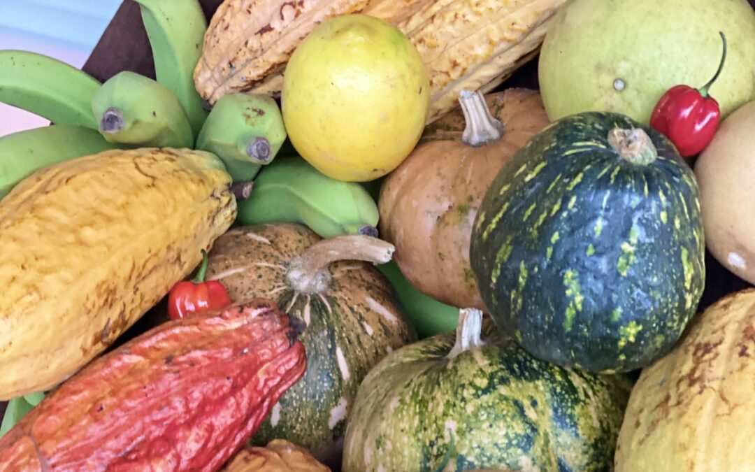 Kamahi Produce and Horticulture: To Grow and Conserve